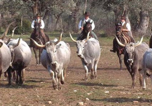 Cowboys in Tuscany? Meet the 'Butteri'!