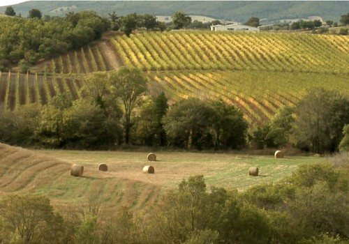 Tasty Maremma: the Wine & Flavors Route