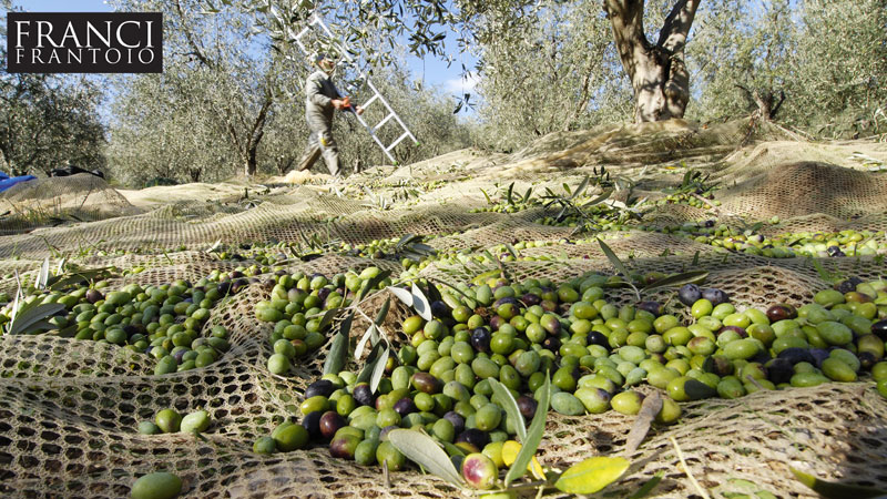 olive-oil-mill-tuscany