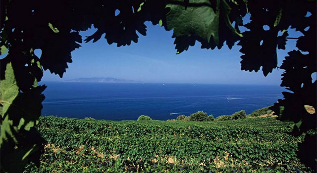 Monte Argentario vineyards, Tuscany