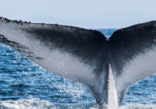Whales spotted in the Argentario waters, southern Tuscany