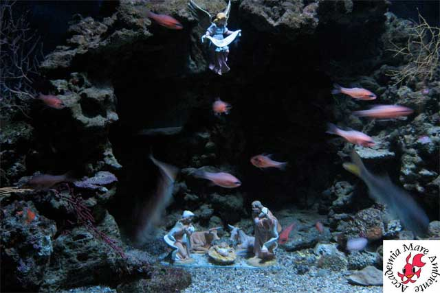 Underwater Nativity Scene, image from acquarioargentario.org