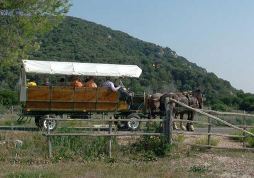 Chariot excursions in the Uccellina Nature Park