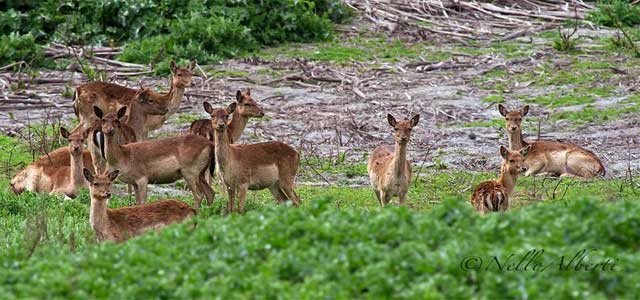 Meet the deer at Duna Feniglia Nature Reserve, Tuscany