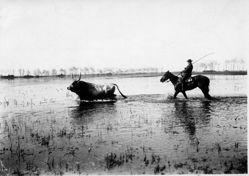 Old photo of a buttero cowboy in the swamps