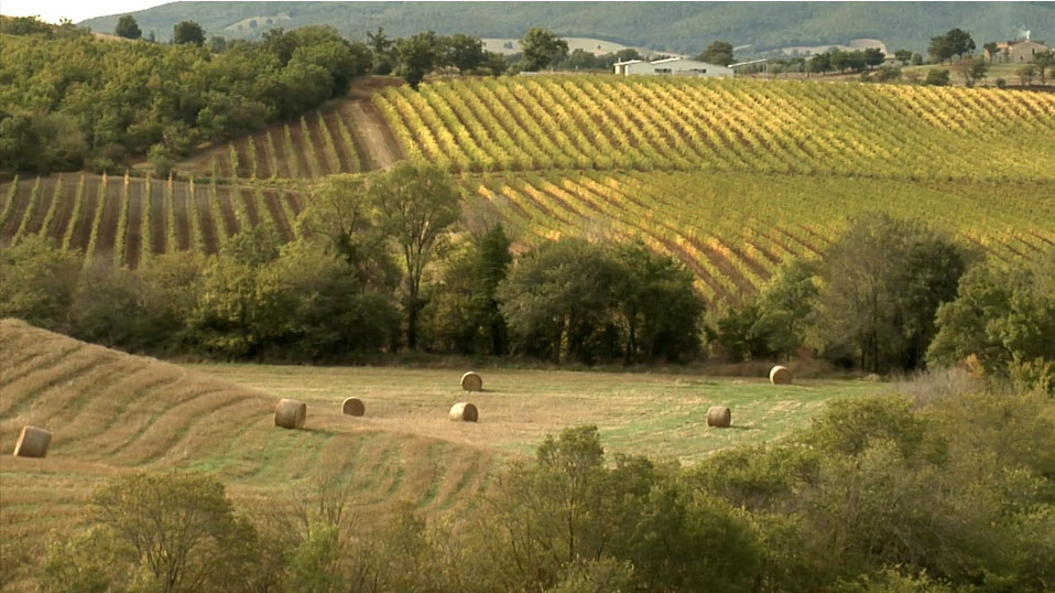 Vineyards of Maremma