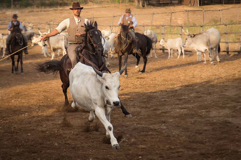 butteri show tuscany cowboys