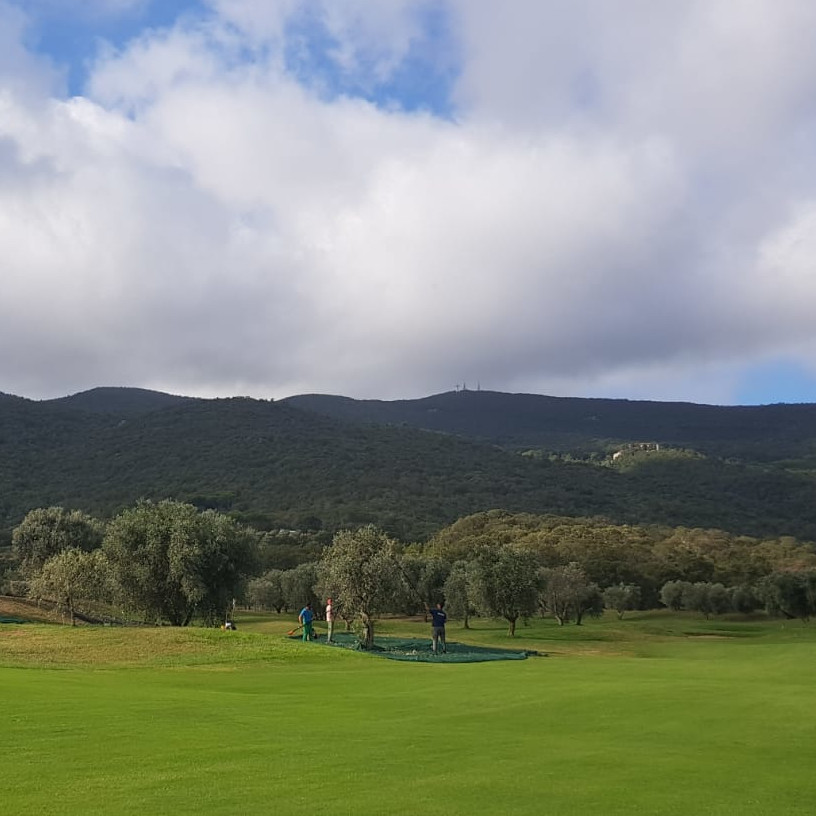 tuscany olive harvest golf course